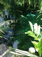 Profi Algen und Sonnenblocker 500 ml (behandelt einmalig 40.000 l) – Bild 3